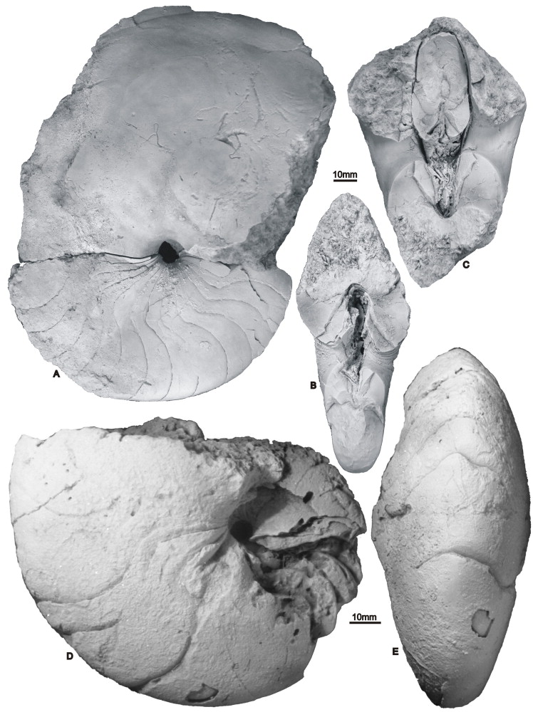 Full-size image (184 K)