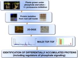 J Proteomics. 2013; 94C:1-22