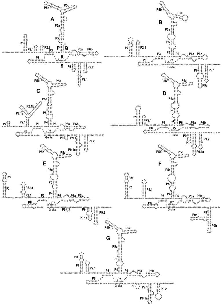 González M.D. 2013. Fungal Biology 117:623-637.