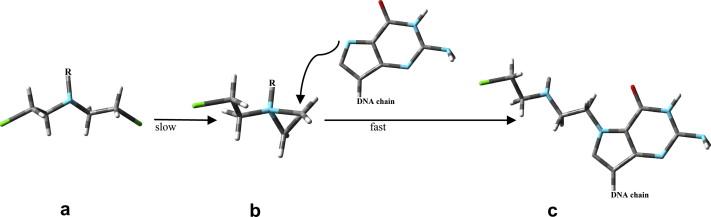 Alkylation of guanine by formononetin nitrogen mustard derivatives ...