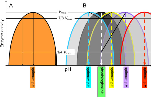 Ultrastructure of Interphase Nucleus