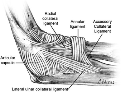 lateral elbow instability - sciencedirect, Human Body