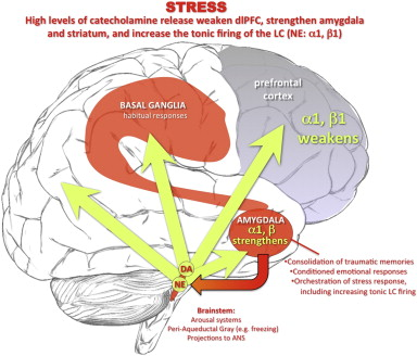 Stress mechanisms and PTSD