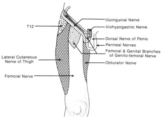 gastrocnemius muscle - sciencedirect topics, Muscles