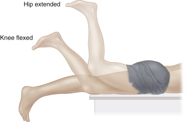 straight leg raise - sciencedirect topics, Muscles