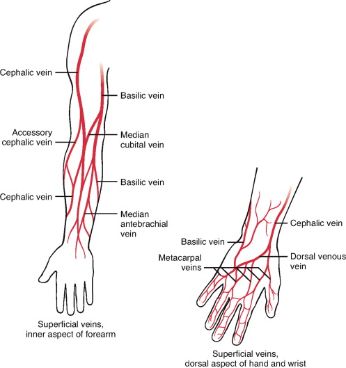 median cubital vein - sciencedirect topics, Cephalic Vein