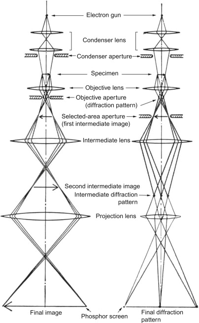Electron microscopy sciencedirect schematic ray diagrams for tem for left imaging mode and right diffraction mode note that the ray diagrams of the two modes are identical above the ccuart Gallery