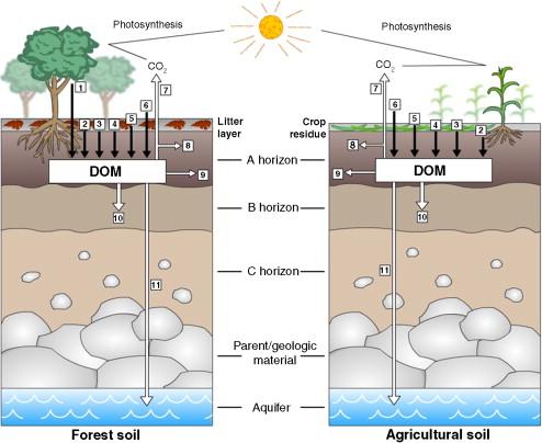 Dissolved Organic Matter Biogeochemistry Dynamics And