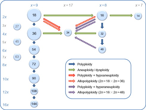 Biology genome evolution biotechnological issues and research download full size image publicscrutiny Image collections