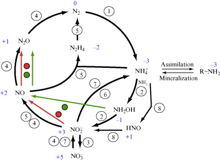 nitrogen cycle an overview sciencedirect topics