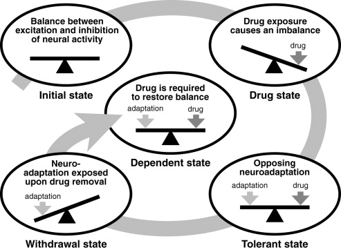 as drug users experience neuroadaptation they demonstrate signs of