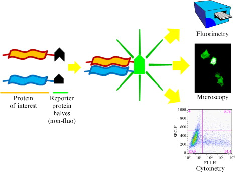 measuring biological responses with automated microscopy inglese james