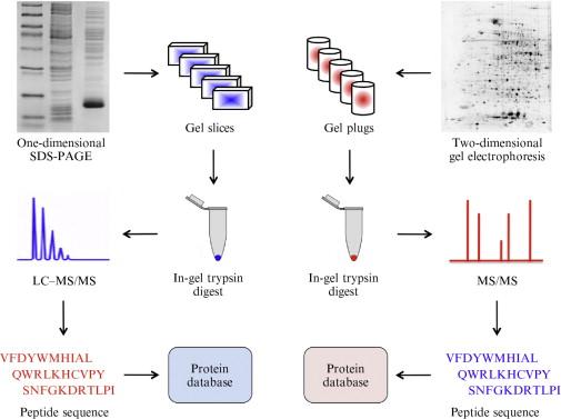 Biochemical Genomics for Gene Discovery in Benzylisoquinoline