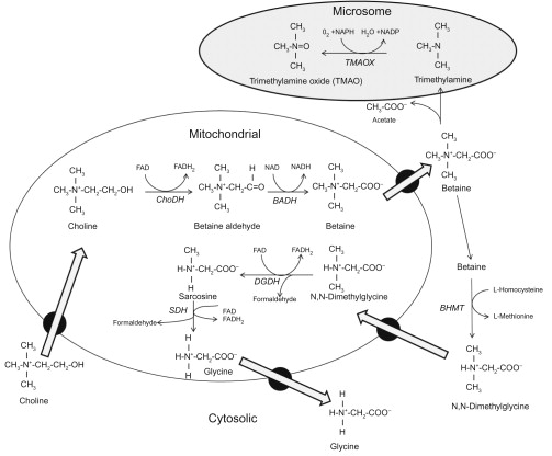 Euryhaline Elasmobranchs