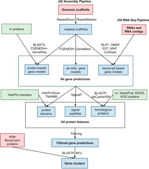 Fungal Genomics: Sequencing and Annotation - ScienceDirect