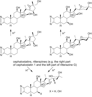Cephalostatins And Ritterazines