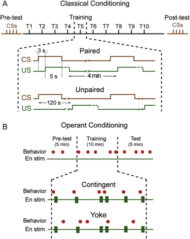Comparison Of Operant And Classical Conditioning Of Feeding Behavior