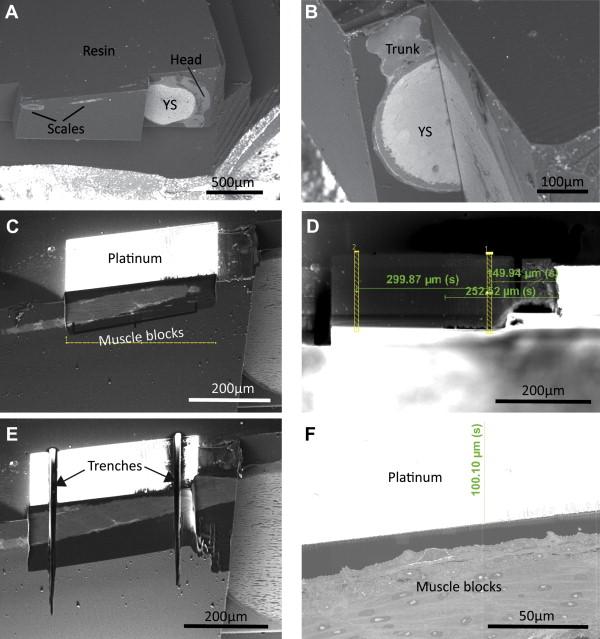 Correlative Light and Volume Electron Microscopy: Using