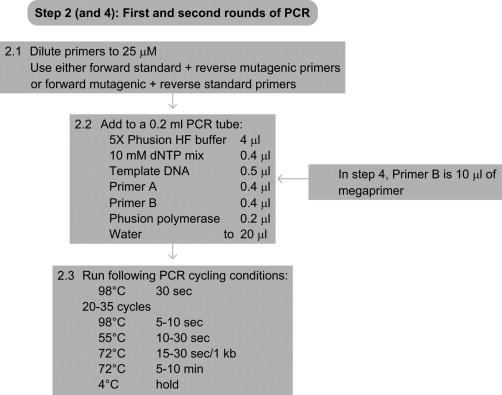 Megaprimer Method for Mutagenesis of DNA - ScienceDirect
