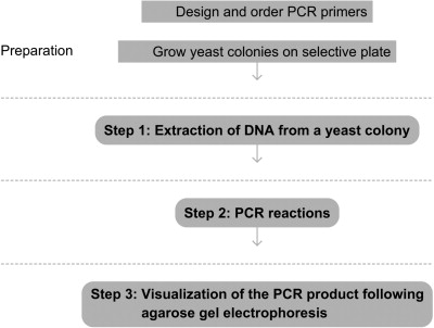 Colony PCR - ScienceDirect