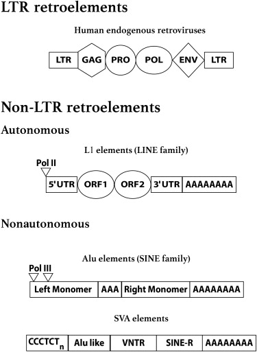 Repetitive Elements and Epigenetic Marks in Behavior and