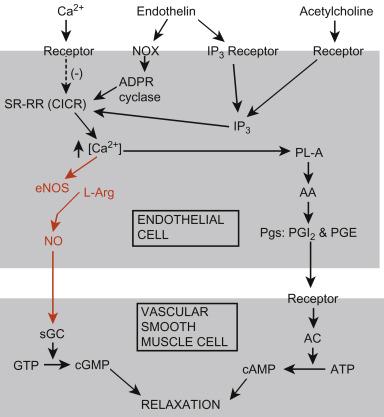 f0acde5d15fb Elasmobranch Cardiovascular System - ScienceDirect