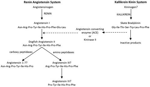 Endocrine Systems In Elasmobranchs ScienceDirect