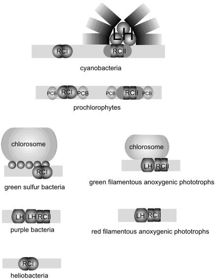Sulphur Oxidation - an overview   ScienceDirect Topics