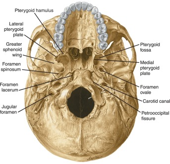 Sphenoid Bone An Overview Sciencedirect Topics Synchondrosis petrooccipitalis — ta petrooccipital synchondrosis: sphenoid bone an overview