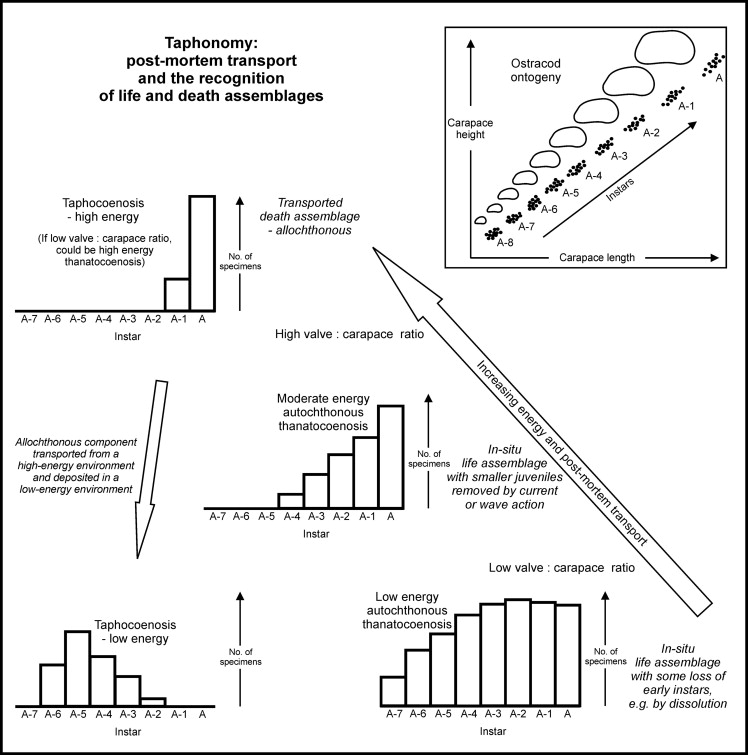 Biocoenosis - an overview | ScienceDirect Topics