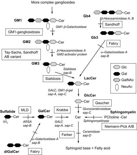 Hydrolyzed Protein - an overview | ScienceDirect Topics