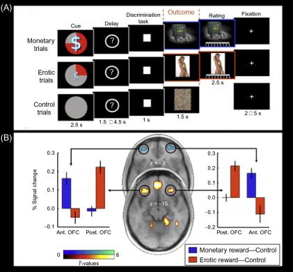 Neural coding of computational factors affecting decision