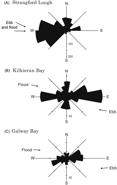 Scallop Ecology: Distributions and Behaviour - ScienceDirect