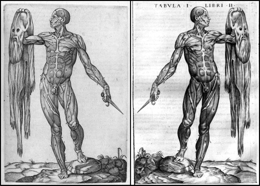 Medieval and Renaissance anatomists: The printing and unauthorized ...