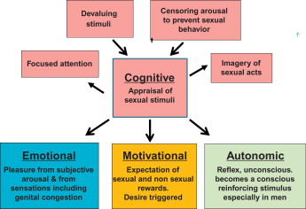 Research on the human sexual response cycle indicates that