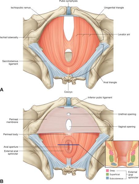 Make breast larger