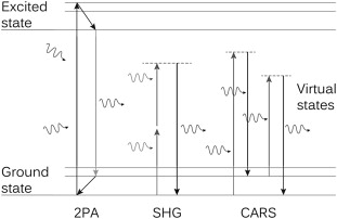 Spectroscopic imaging sciencedirect left jablonski diagram for two photon absorption middle second harmonic generation shg right coherent anti stokes raman scattering cars ccuart Gallery