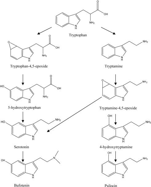 Bioactive Alkaloids of Hallucinogenic Mushrooms - ScienceDirect