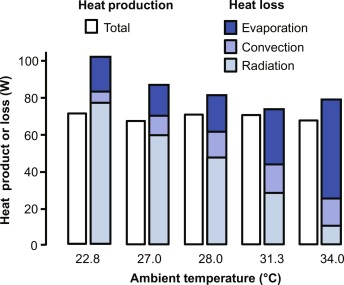 The thermoregulation system and how it works - ScienceDirect