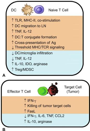 Temperature and adaptive immunity - ScienceDirect