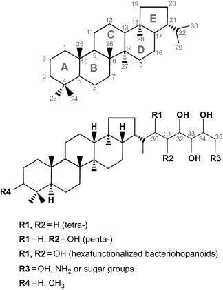 Hopanoids In Cyanobacteria Biomass And Related Samples