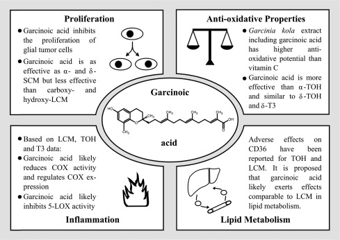 Garcinoic Acid: A Promising Bioactive Natural Product for