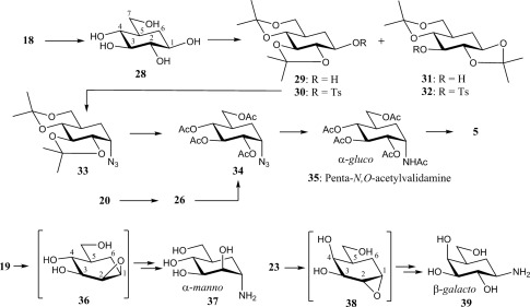Synthesis of N-Linked Carbaoligosaccharides: Total Synthesis