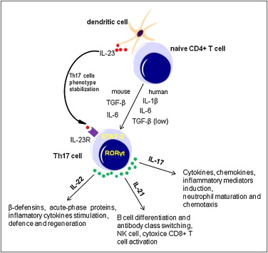 The Role Of Th17 Cells In Tumor Immunity Sciencedirect