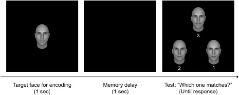 Memory across a short-delay: Systematic biases in memory for