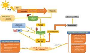 Vitamina d para dermatitis atopica