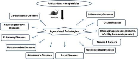 Pleiotropic functions of antioxidant nanoparticles for