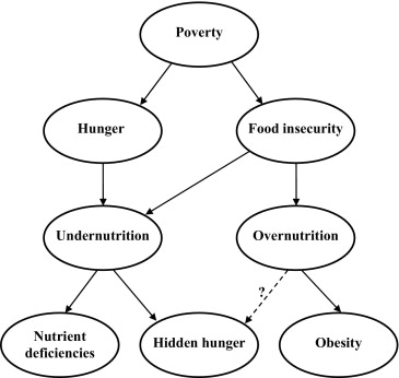 Poverty Obesity And Malnutrition An International Perspective Recognizing The Paradox Sciencedirect