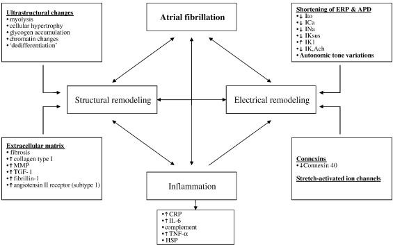 Atrial Fibrillation Concept Map.Current Concepts In The Pathogenesis Of Atrial Fibrillation