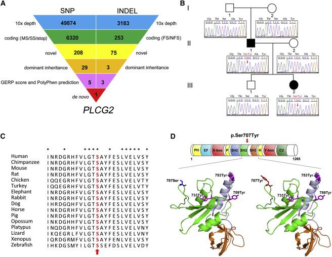 A Hypermorphic Missense Mutation in PLCG2, Encoding Phospholipase